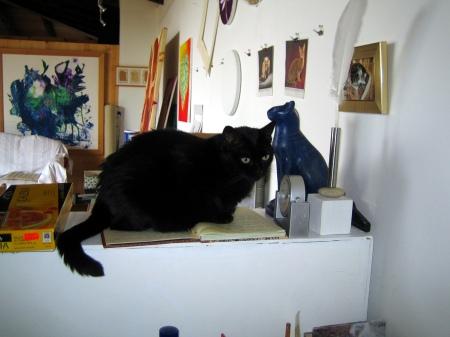 Katze Shiva bewacht das  Atelier