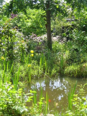 Blick in den grünen Garten